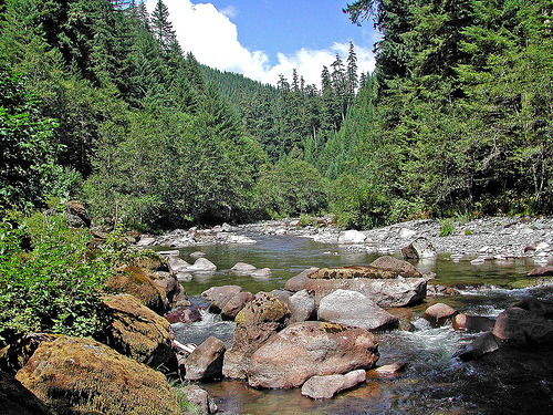 Quartzville Creek is great for new gold prospectors